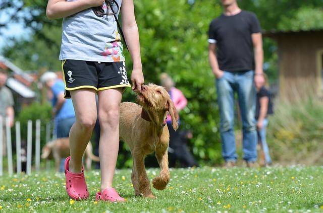 dog walking park